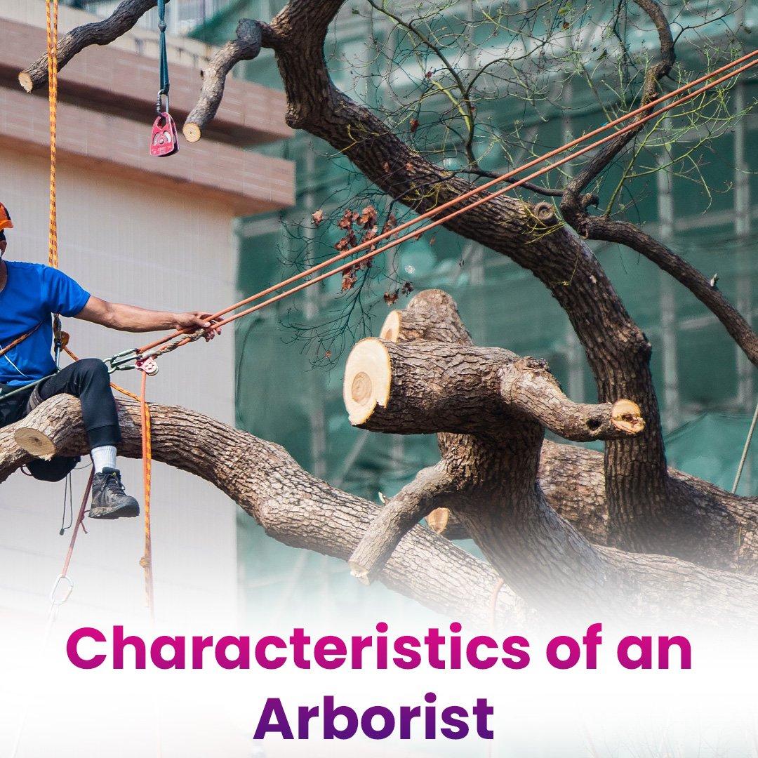 Characteristics of an Arborist In Cocoa Fl: