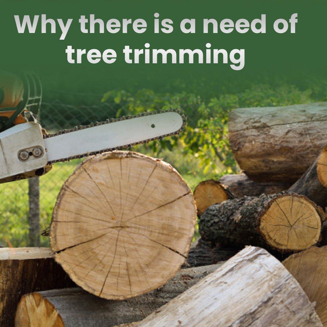 Why there is a need for tree trimming:
